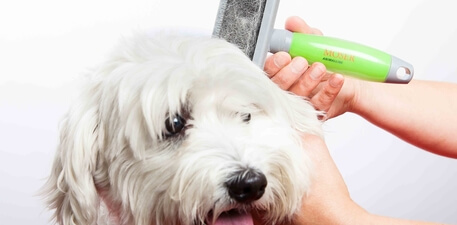 Application Tips for Grooming